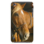 Chestnut Horse Design iTouch Case Barely There iPod Cases