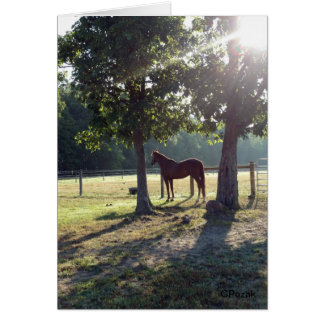 Chestnut Horse in a field Card