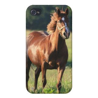 Chestnut Horse iPhone Case