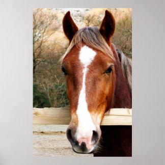 CHESTNUT HORSE PRINT