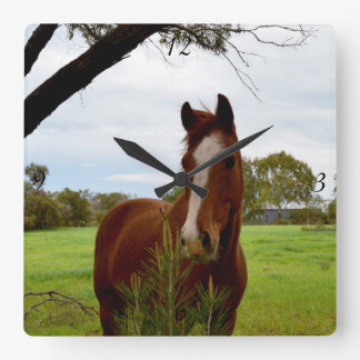 Chestnut Horse Sniffing A Banksia Tree, Square Wall Clock
