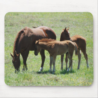 Chestnut Mare & Foals Mousepad