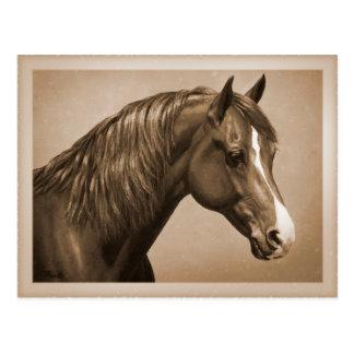 Chestnut Morgan Horse in Sepia Postcard