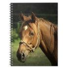 Chestnut Pony Notebook