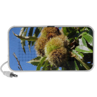 Chestnuts Hanging On The Tree Laptop Speakers