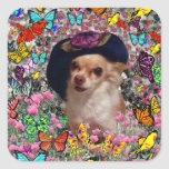 Chi Chi in Butterflies  - Chihuahua Puppy in Hat