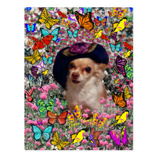 Chi Chi in Butterflies  - Chihuahua Puppy in Hat Postcards