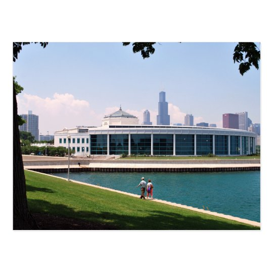 Chicago Shedd Aquarium collection Postcard