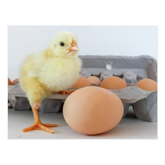 Chick and Egg Carton with Brown Egg Postcard
