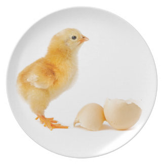Chick Plate
