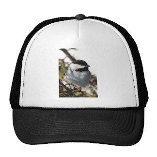 Chickadee 9693 cap