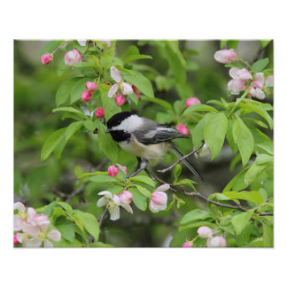 Chickadee and spring blossoms poster