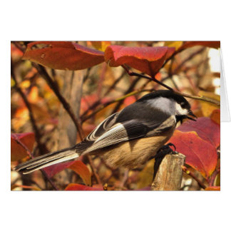 Chickadee Bird in Pink Autumn Thank You Card