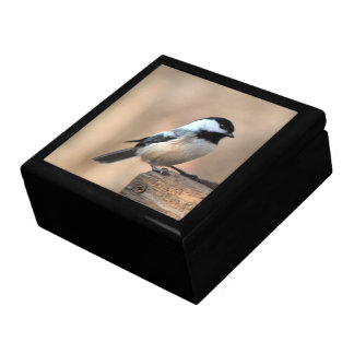 Chickadee in Golden Light Gift Box