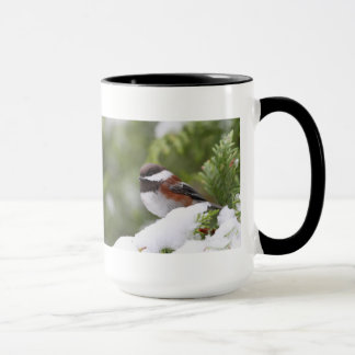 Chickadee in Snow on a Cedar Tree Mug