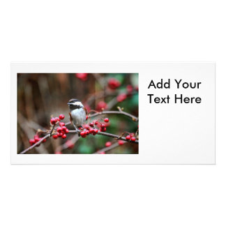 Chickadee on Branch with Red Berries Picture Card