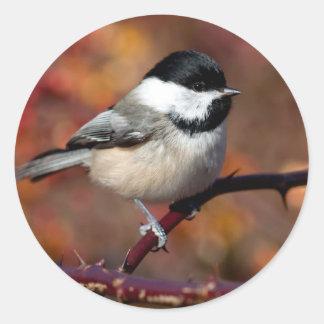 Chickadee Round Sticker