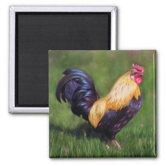 Chicken Art Stuart Bantam Rooster Square Magnet