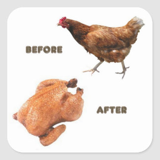 Chicken Before and After Square Sticker