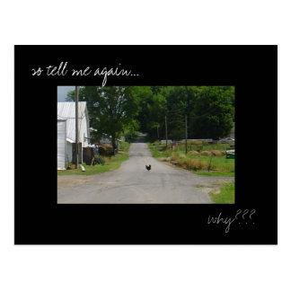 'Chicken Crossing Road' photo postcard