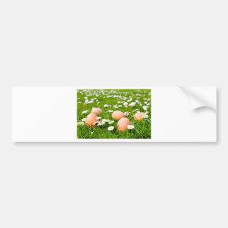 Chicken eggs in grass with daisies bumper sticker