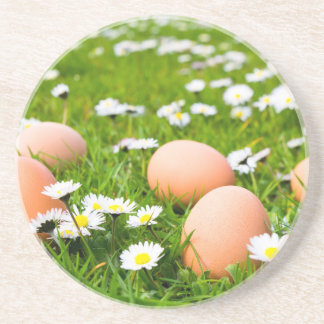Chicken eggs in grass with daisies coaster