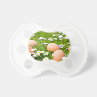 Chicken eggs in grass with daisies dummy