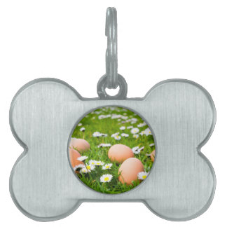 Chicken eggs in grass with daisies pet ID tag