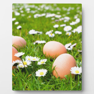 Chicken eggs in grass with daisies plaque