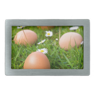 Chicken eggs in spring grass with daisies belt buckle