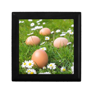 Chicken eggs in spring grass with daisies gift box