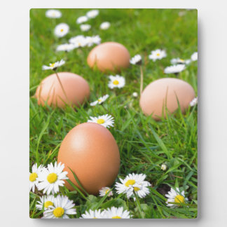 Chicken eggs in spring grass with daisies plaque