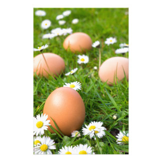 Chicken eggs in spring grass with daisies stationery