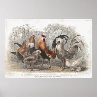 Chicken & Hen Antique Lithographic print