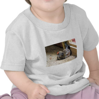 Chicken Infant Tshirt