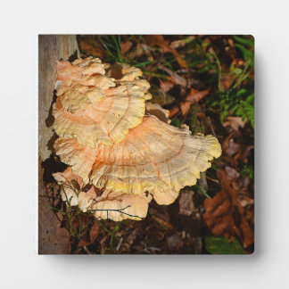 Chicken of the Woods Plaque
