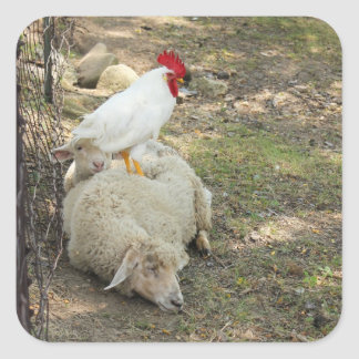 Chicken Sitting on a Sheep Stickers