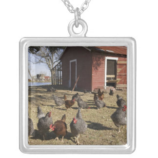 Chickens working grounds near hen house Cliburn Square Pendant Necklace
