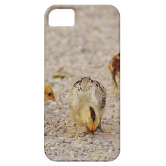 Chicks #2 case for the iPhone 5