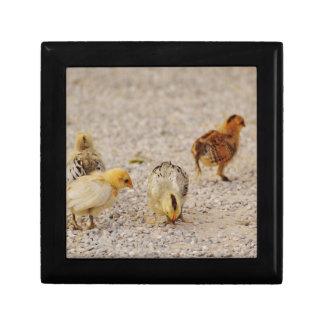 Chicks #2 gift box