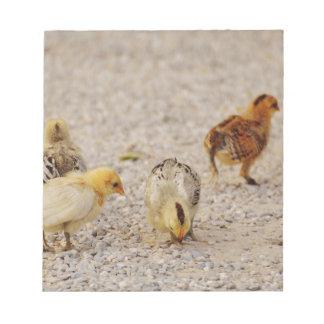 Chicks #2 notepad