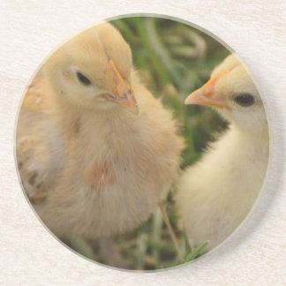 Chicks Coaster