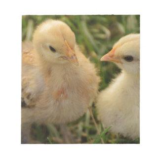 Chicks Notepad