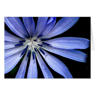Chicory Collection Card