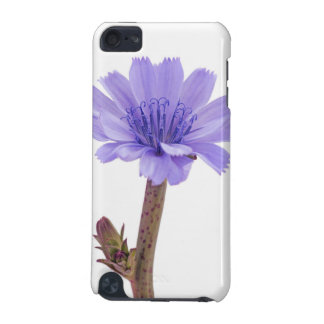 Chicory flower iPod touch 5G covers