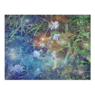 Chicory Grass Post Card