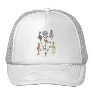 Chicory Vintage Botanical Hat