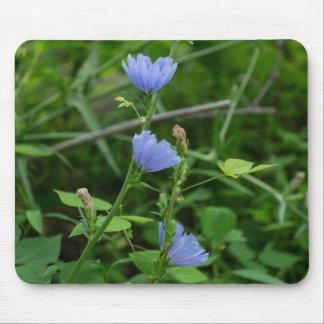 Chicory Wildflowers Blue Wildflowers Mousepad