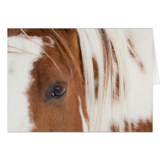 Chief's Eye Horse Greeting Card