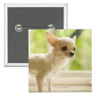 Chihuahua 15 Cm Square Badge
